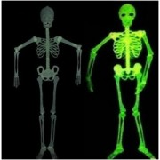 SkeletonGID88cm